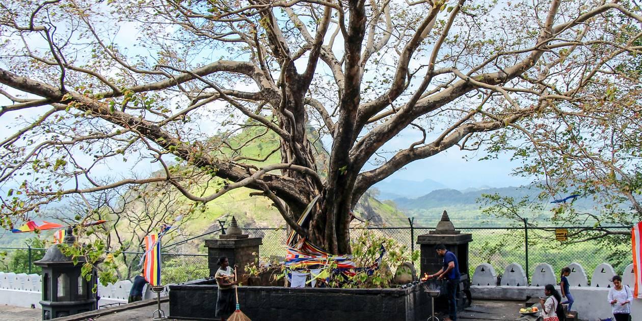 Temple du Rocher Royal à Dambulla - Province du Centre - Sri Lanka