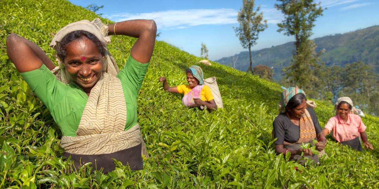 Cueillette du thé - Sri Lanka