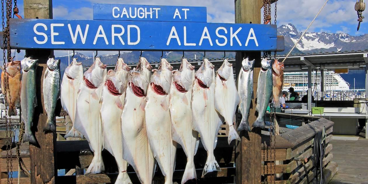 Pesée des flétants dans le port de Seward - Alaska - Etats-Unis