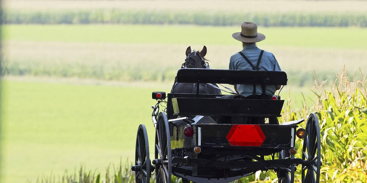 Visite du pays Amish en buggy - Intercourse - Etats-Unis