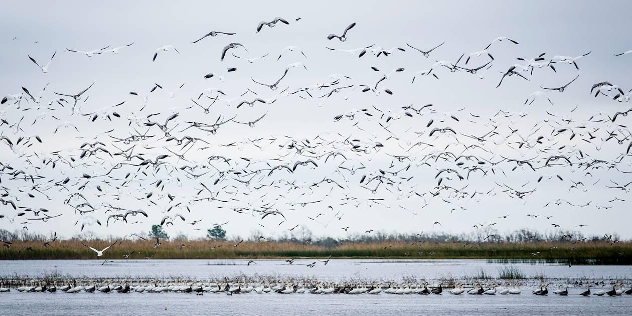 Creole Nature Trail - Lake Charles - Louisiane - Etats Unis