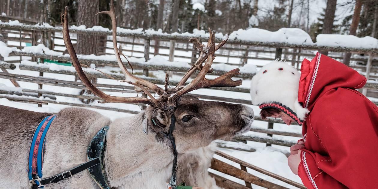 Safari en traîneau à rennes - Laponie - Finlande