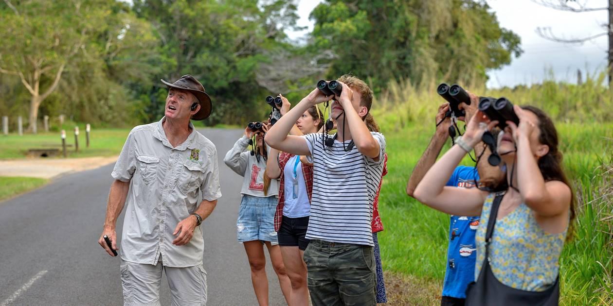 Observation de la faune et flore de la Rainforest - Cairns - Le Queensland - Australie