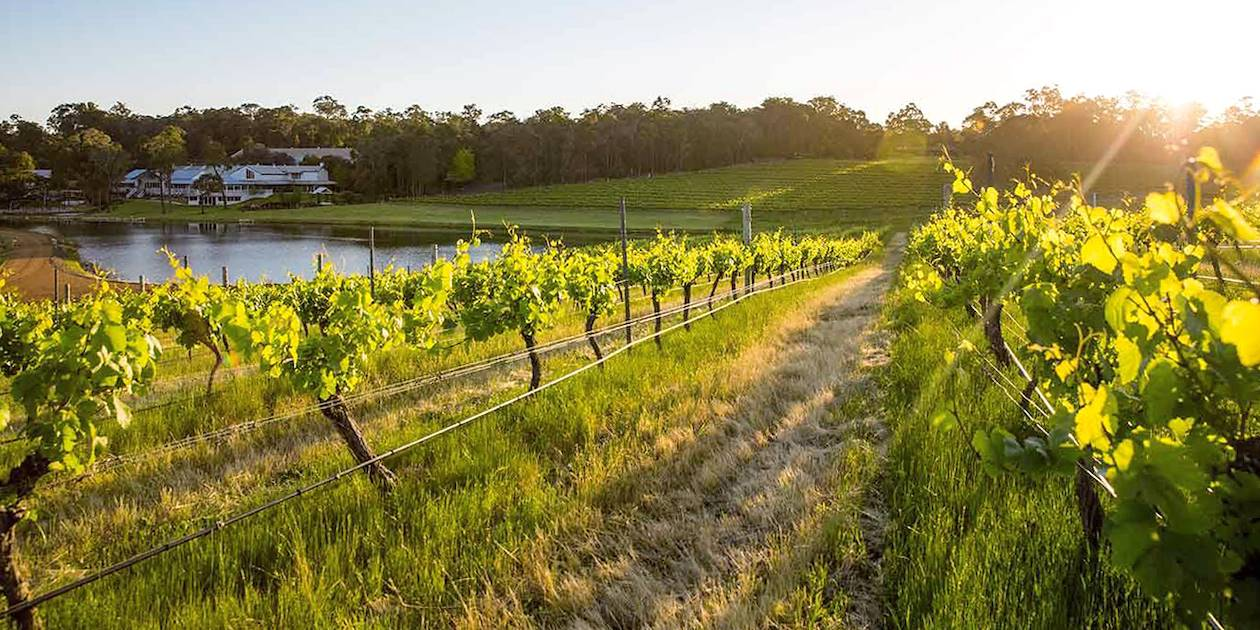 Vignoble de Margaret River - Australie-Occidentale - Australie