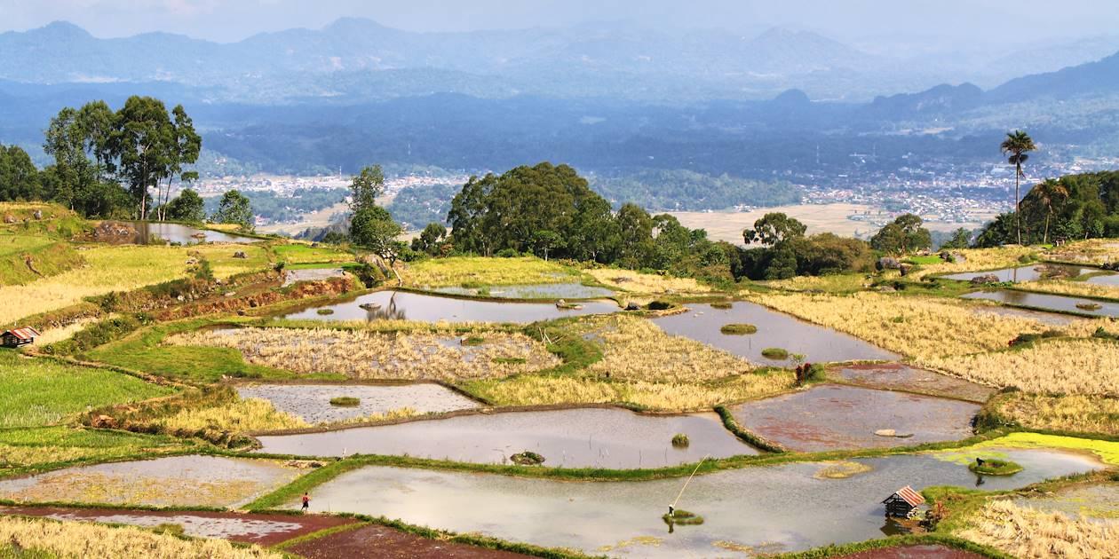 Limbong - Sulawesi - Indonésie