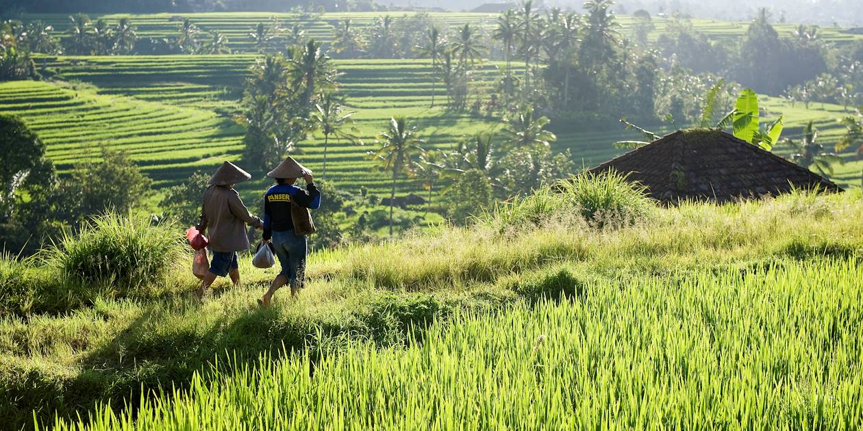 Les rizières de Jatiluwih - Bali - Indonésie