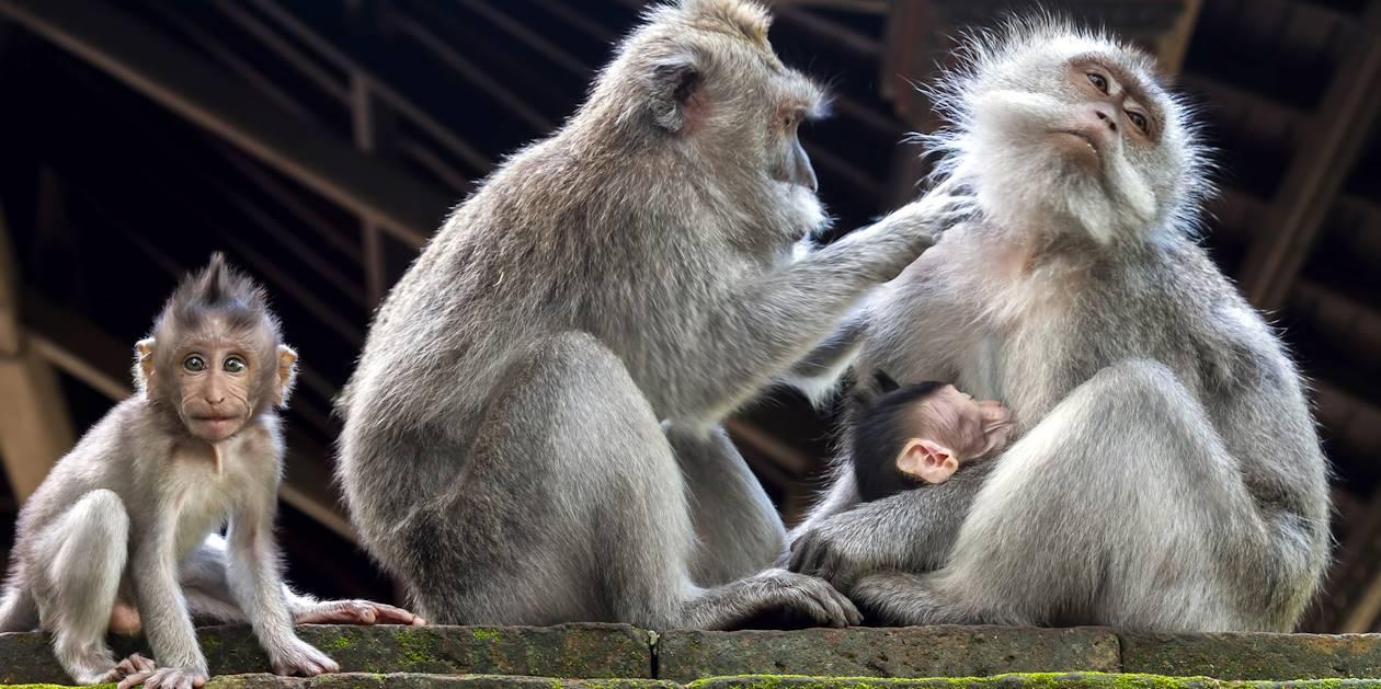 Monkey forest - Bali - Indonésie