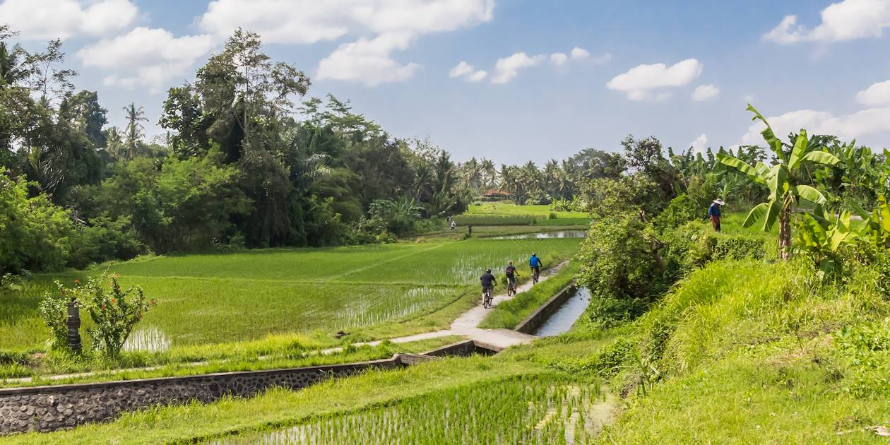 Balade en vélo dans les rizières - Magelang  - Indonésie
