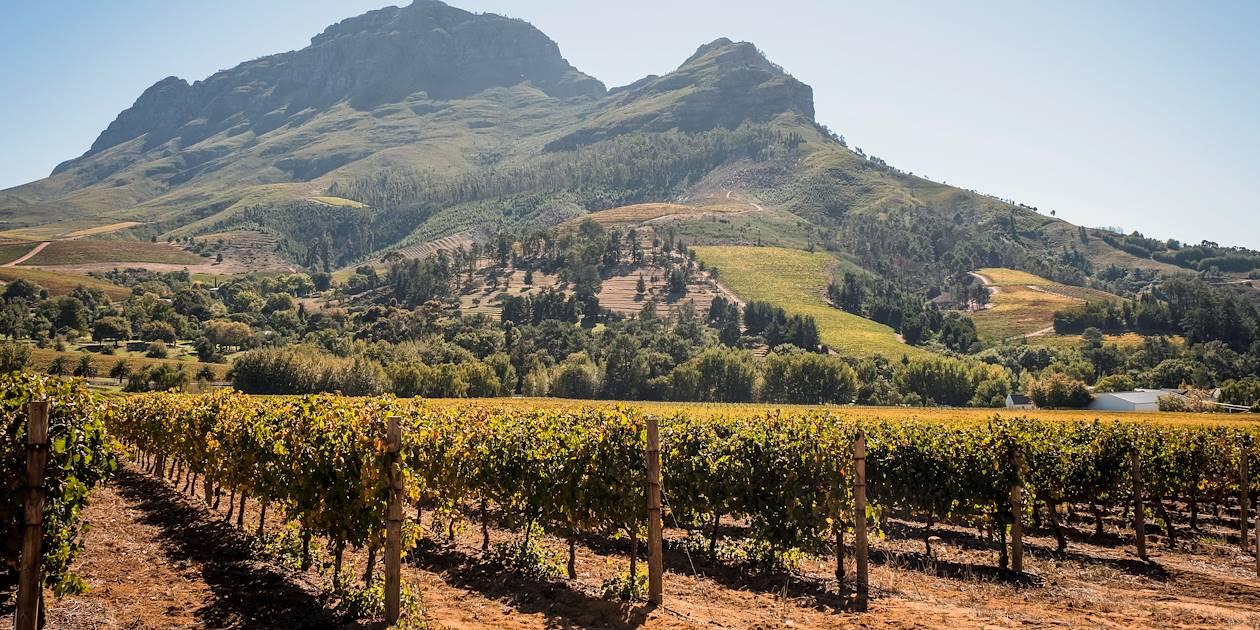 Sur la Route des Vins - Stellenbosch - Afrique du Sud
