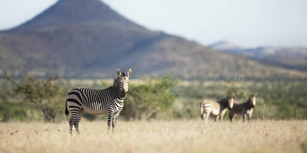 Zèbres dans le parc national Pilanesberg - Afrique du Sud