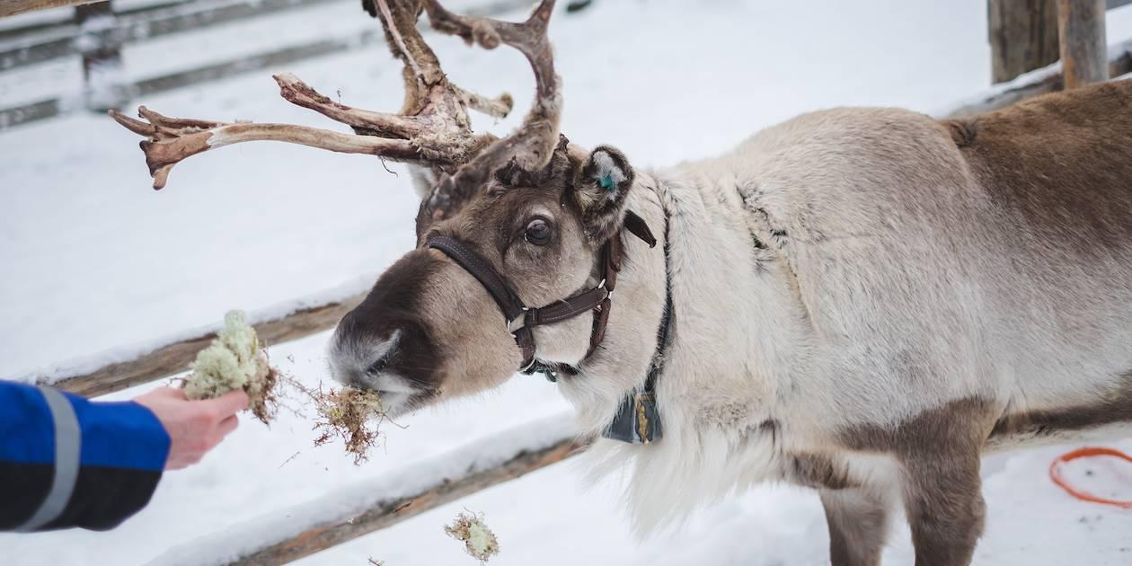 Dans la peau d'un berger - Inari - Laponie - Finlande