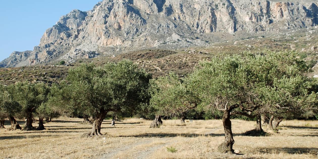 Préveli - Crète - Grèce