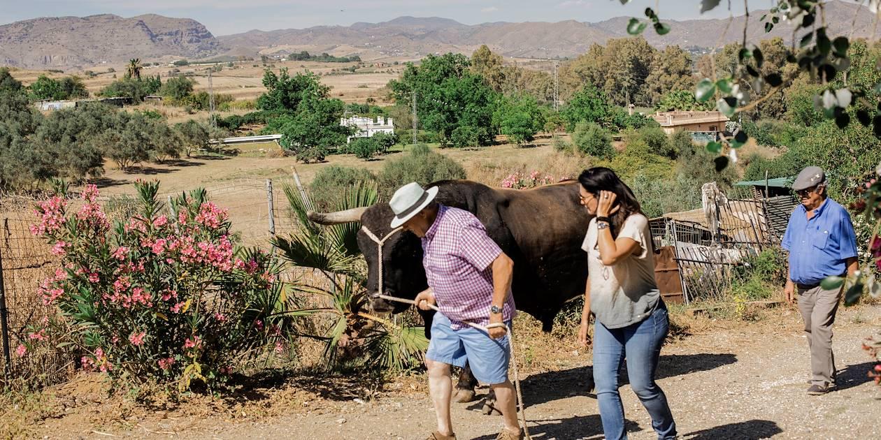 Visite d'une ferme de taureaux Pajunos - Pizarra - Andalousie - Espagne