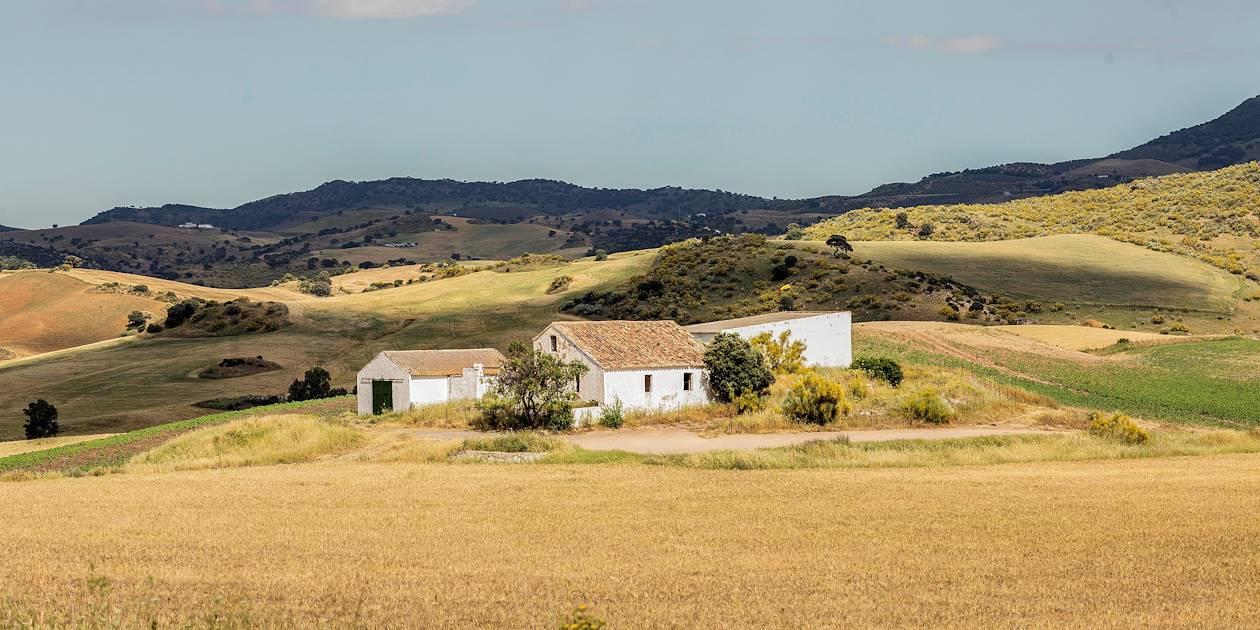 Sur la route des villages blancs : paysage autour de Montecordo - Andalousie - Espagne