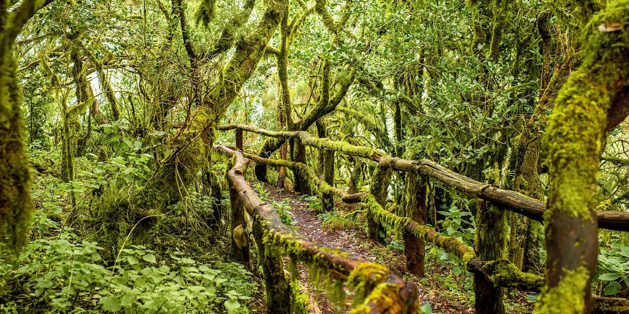 Parc National de Garajonay - Canaries - Espagne