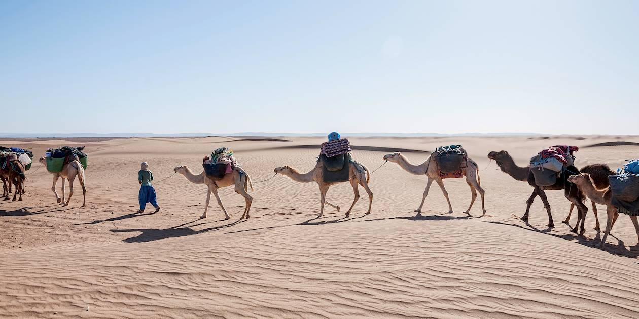 Chameaux dans les dunes de Nesrate - Maroc
