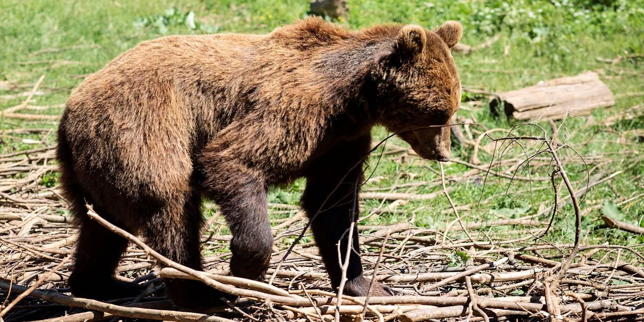 Le sanctuaire des ours de Kuterevo - Croatie