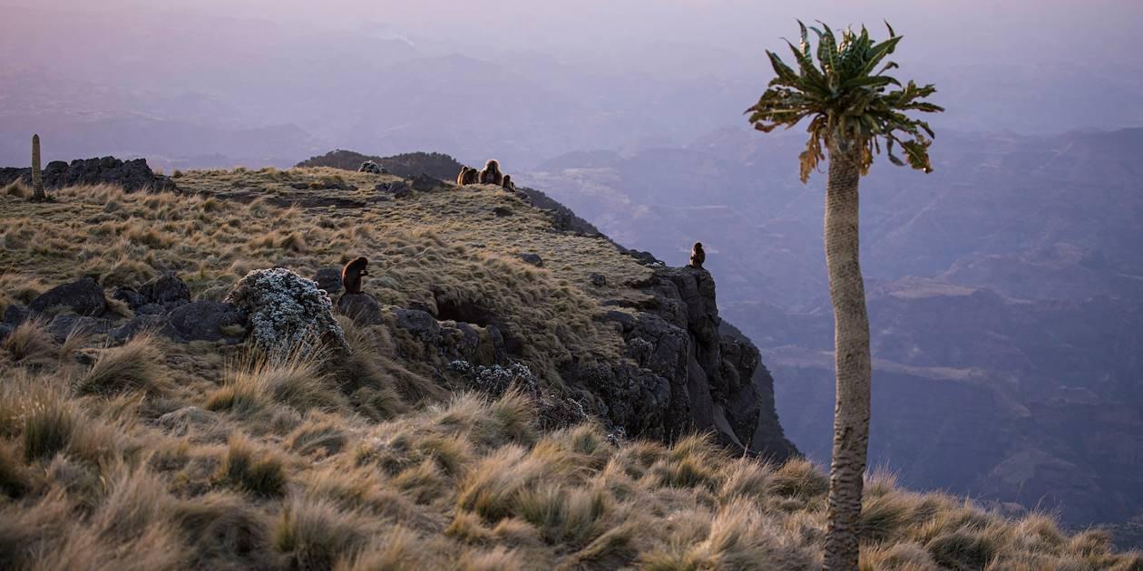 Coucher de soleil dans le Parc du Simien - Ethiopie