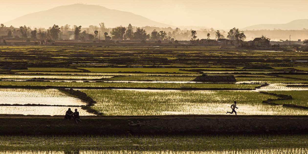 Coucher de soleil sur les rizières - Madagascar