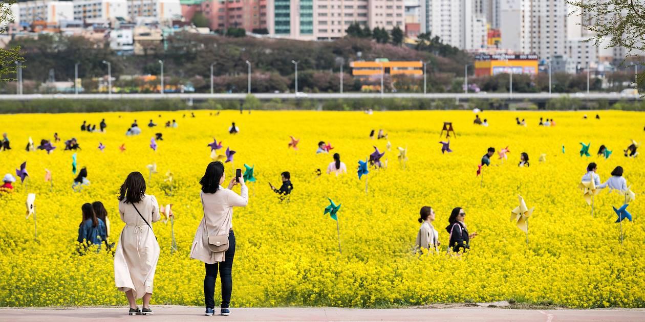 Daejeo Ecological Park à Busan - Corée du Sud