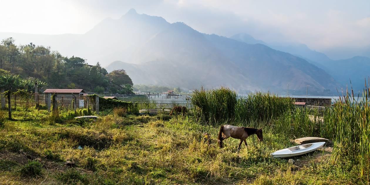 Cheval près du lac Atitlan - San Juan la Laguna - Guatemala