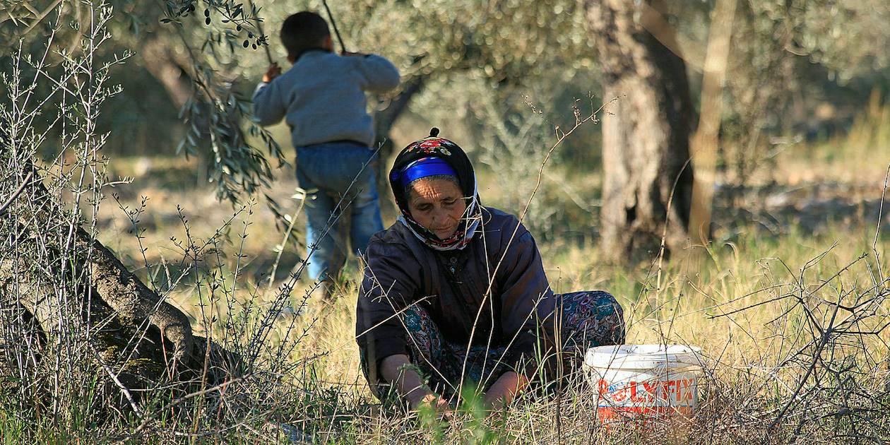 Femme dans un champs d'oliviers près d'Ayvalik - Turquie