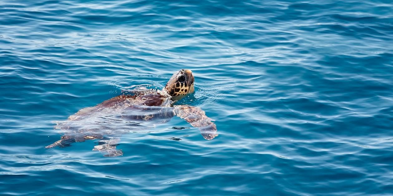 Tortue de mer, près de la côte - Turquie