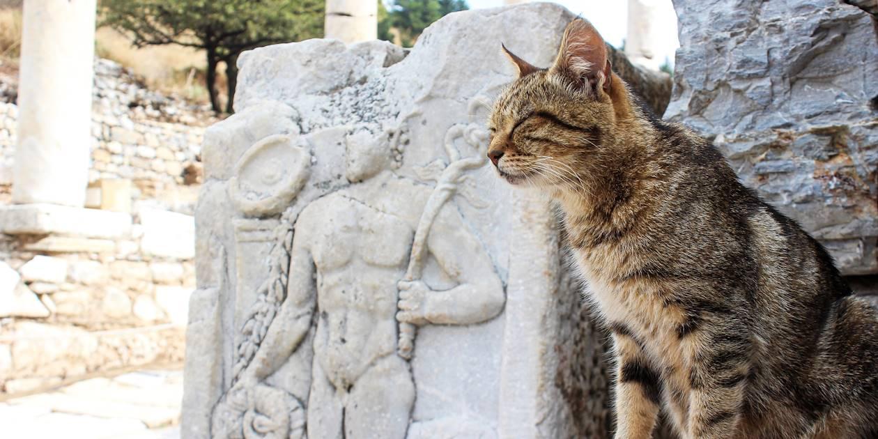Chat dans cité antique d'Ephèse - Maroc