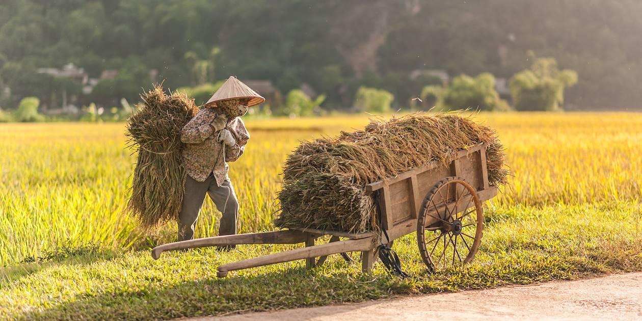 Femme travaillant dans les rizières - Mai Chau - Vietnam