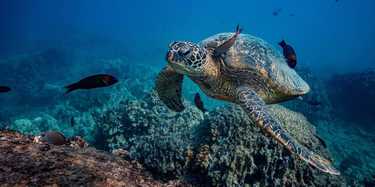 Faune marine et récif corallien - Thaïlande