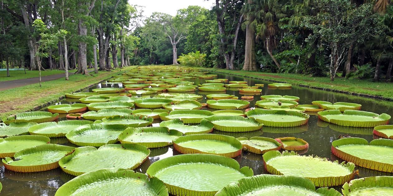 Le jardin de Pamplemousses - Île Maurice