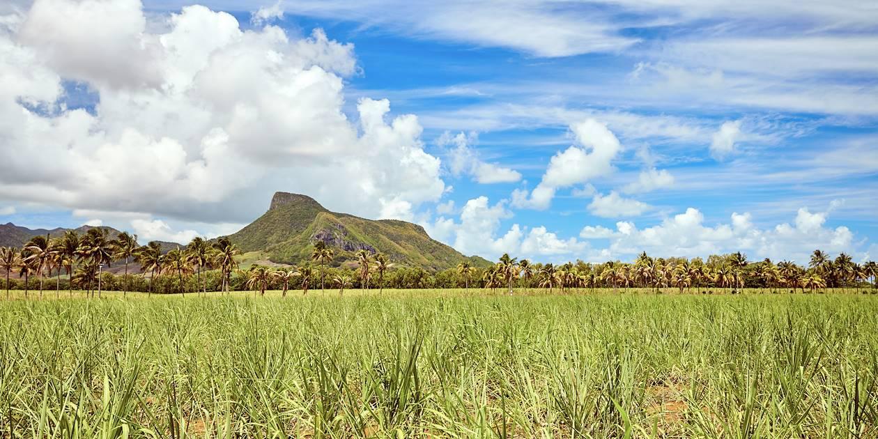 Champs de canne à sucre - Montagne du Lion - Île Maurice