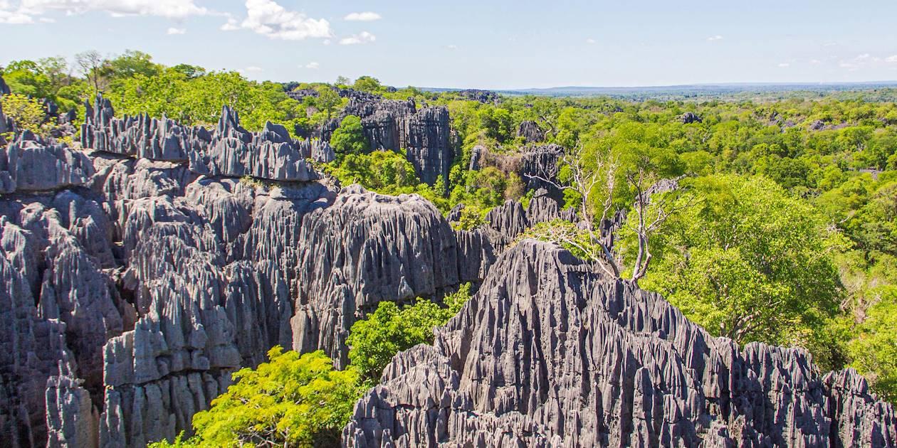 Tsingys de l'Ankarana - Madagascar