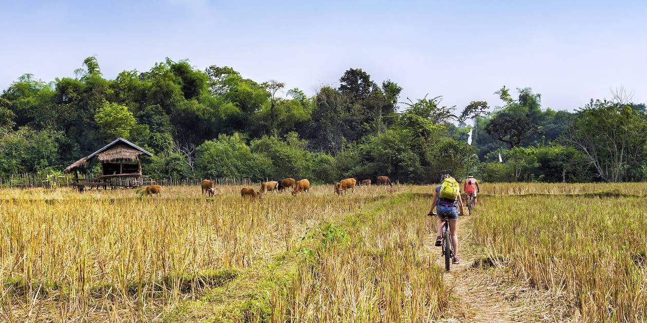 La campagne de Battambang à vélo - Battambang - Cambodge