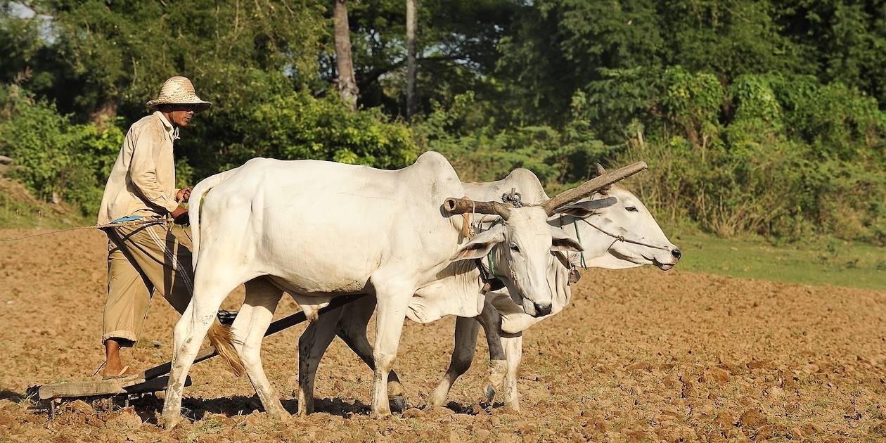 Fermier labourant son champs - Ratanakiri - Cambodge