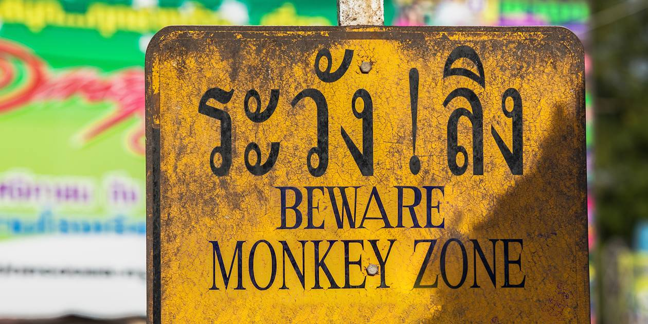 Attention aux singes ! - Cambodge