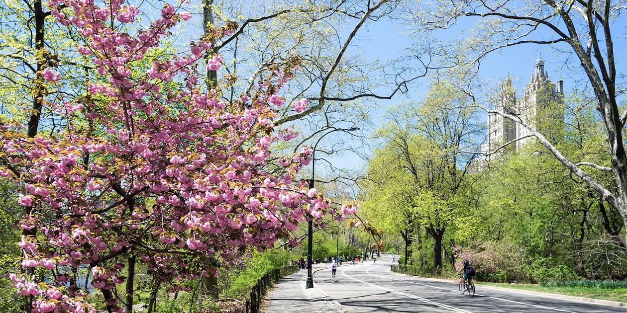 Printemps à Central park - New York - Manhattan - Etats Unis