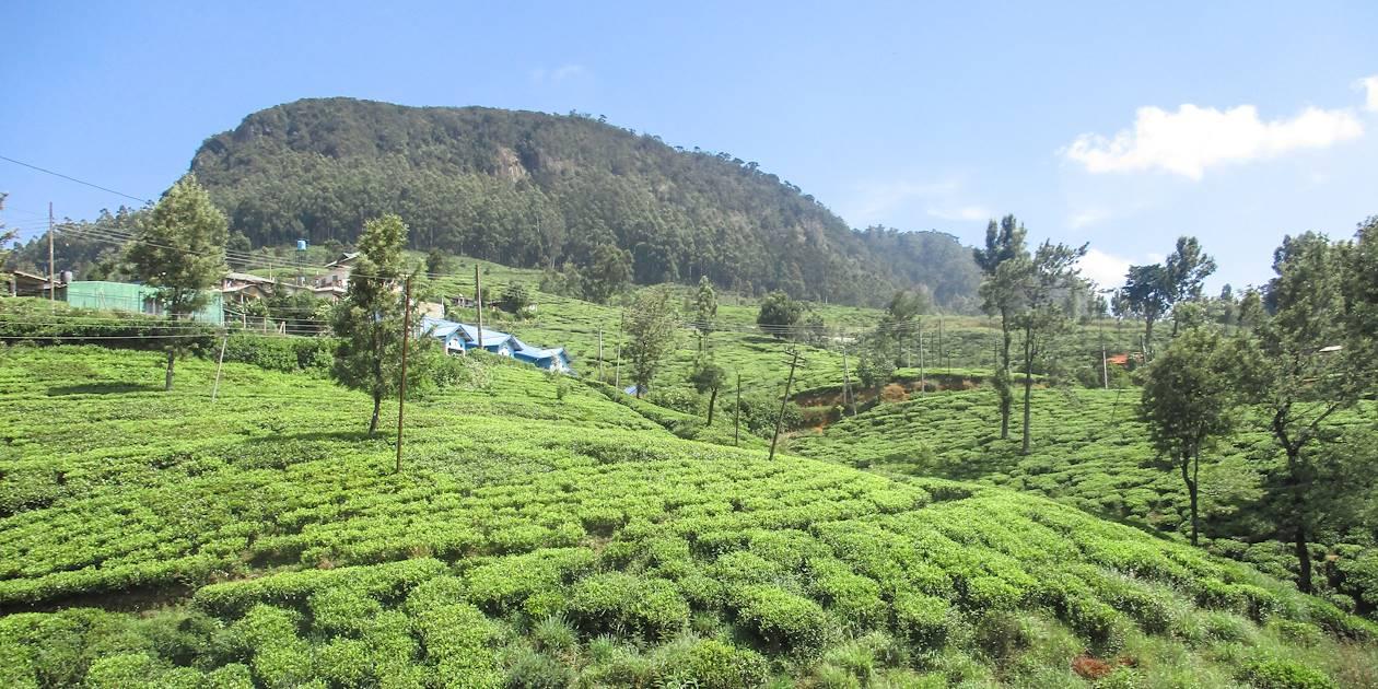 Nuwara Eliya - Province du Centre - Sri Lanka