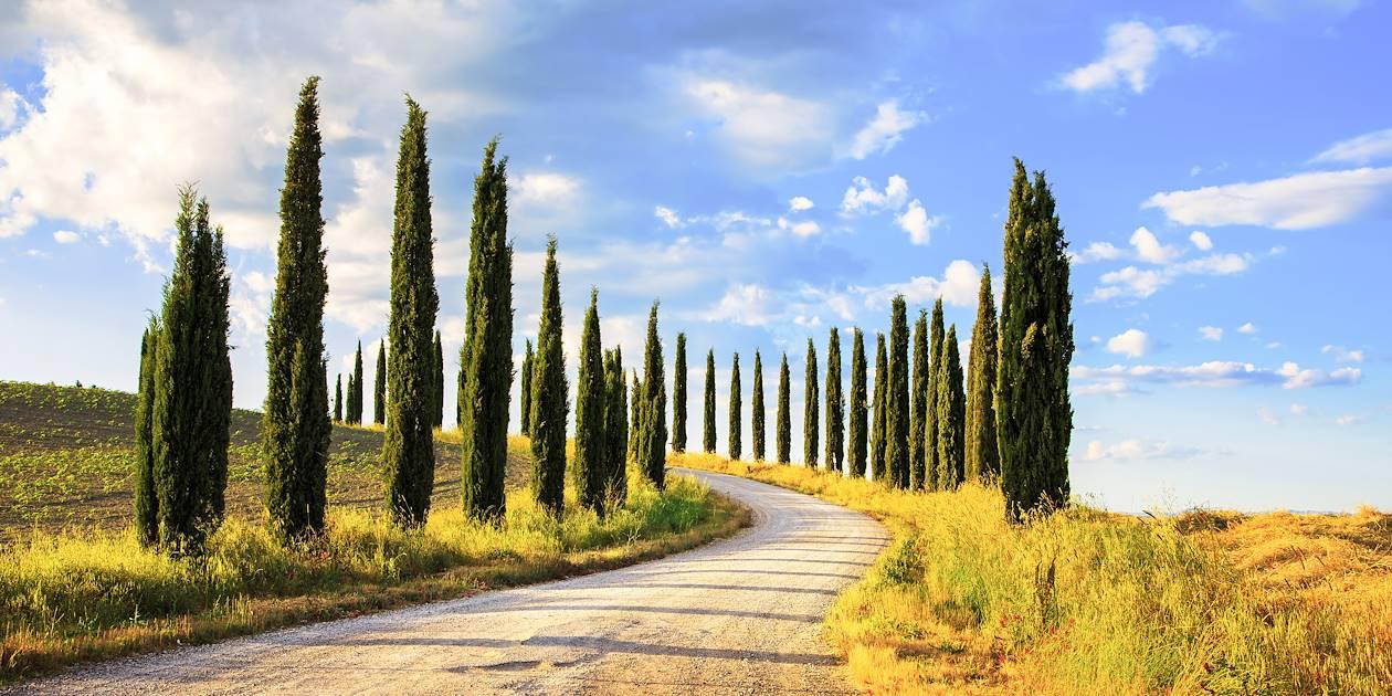 Route bordés de cyprès en Toscane - Italie