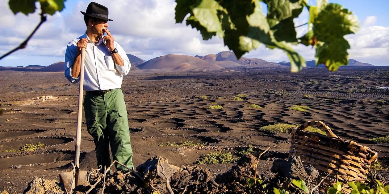 Vignes sur l'île de Lanzarote - Iles Canaries - Espagne