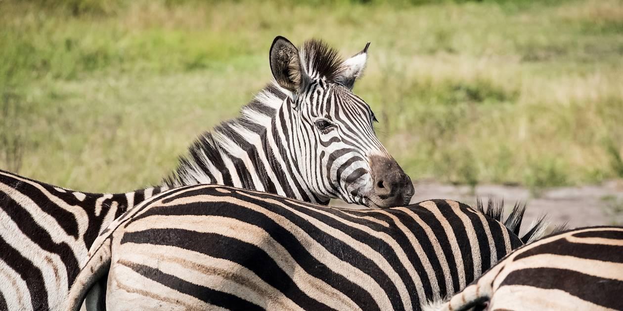 Zèbres dans la réserve de Santa Lucia - Santa Lucia - KwaZulu-Natal - Afrique du Sud