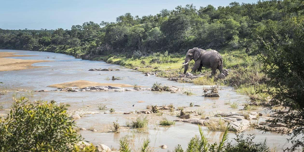 Éléphant près d'une rivière - Parc Kruger - Afrique du Sud