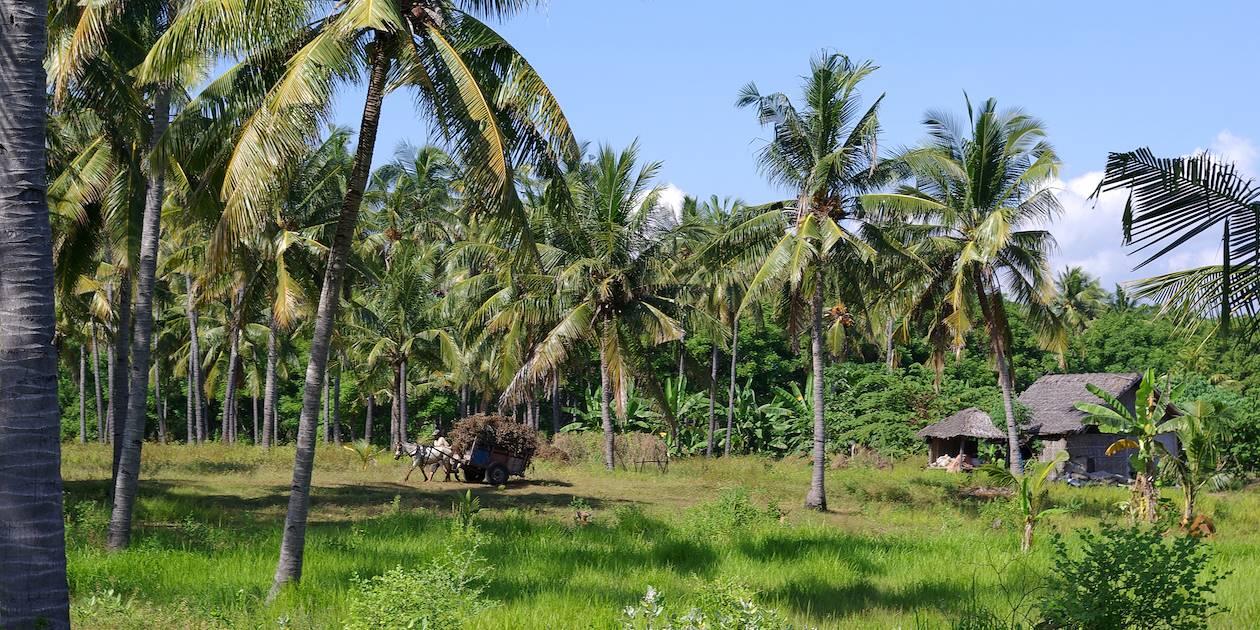 Gili Air - Archipel des Gili - Lombok - Indonésie