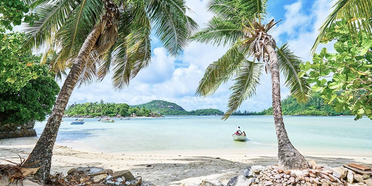 Cocos de mer sur la plage - Anse l'Islette - Mahé - Seychelles