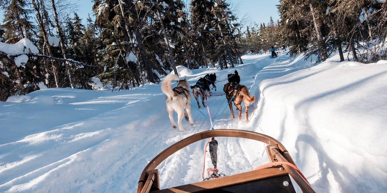Safari en traîneau à chiens Husky à travers la forêt - Laponie - Finlande