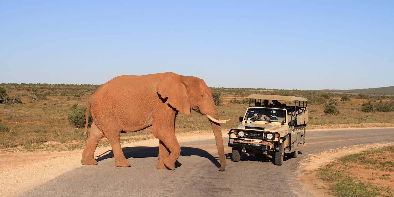 Safari en 4x4 dans une réserve naturelle - Etosha - Namibie
