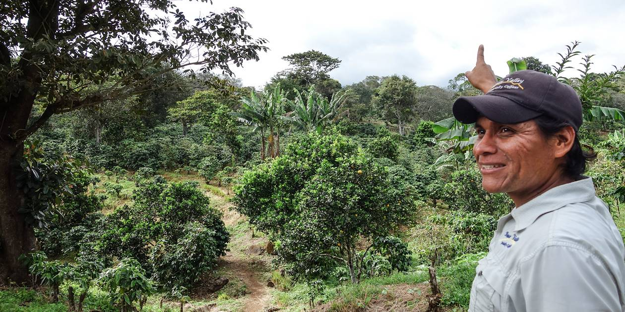 Visite d'une plantation de café à Boquete - Chiriquí - Panama