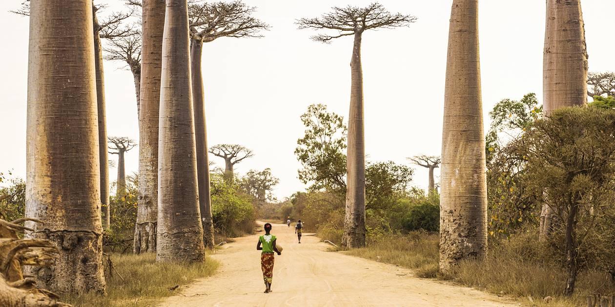 Allées des Baobabs - Morondava - Madagascar