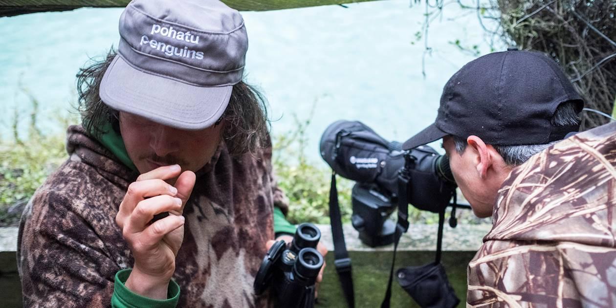 Observation du petit manchot bleu - Akaroa - Île du Sud - Nouvelle Zélande