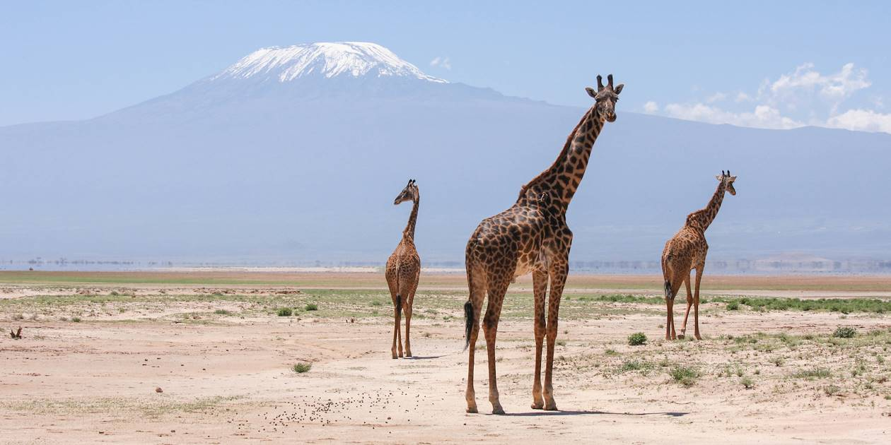 Girafes devant le Kilimandjaro - Vallée du grand rift - Kenya